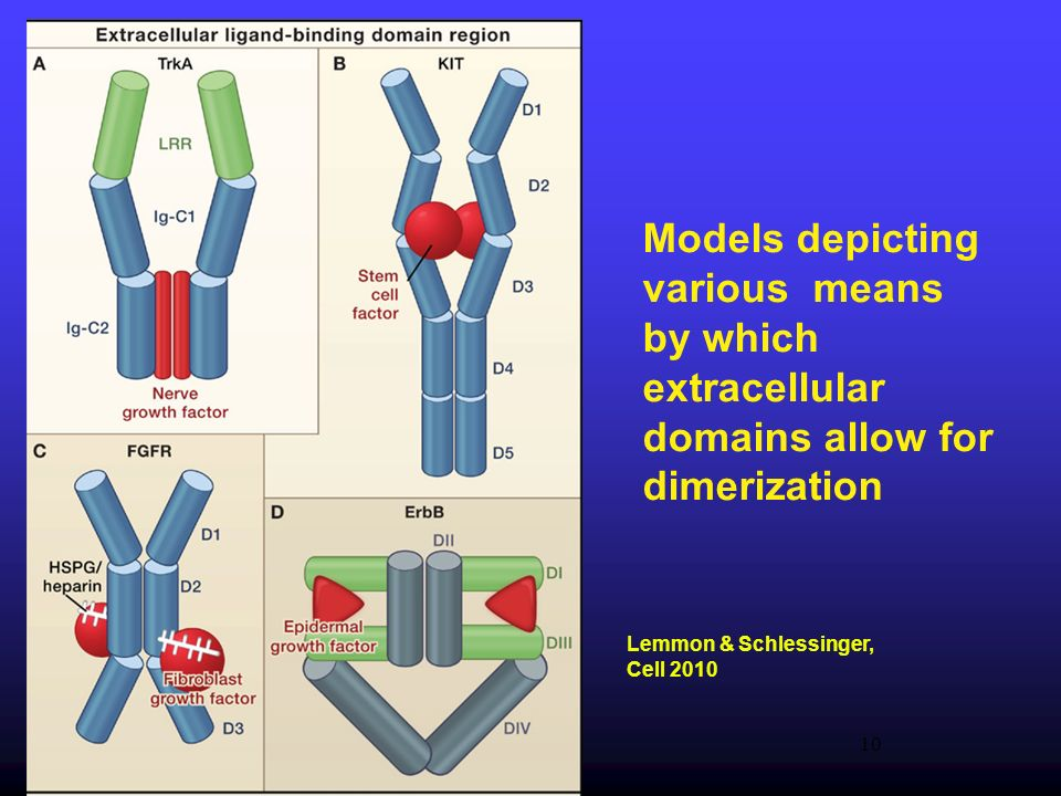 Models depicting various means by which extracellular domains allow for dimerization