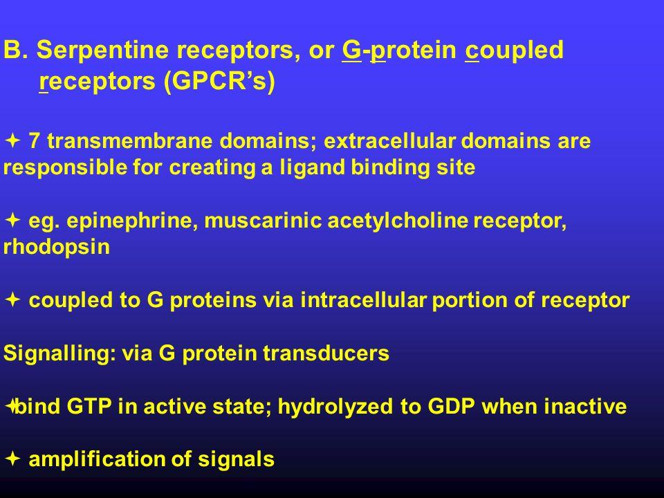 B. Serpentine receptors, or G-protein coupled receptors (GPCR's)