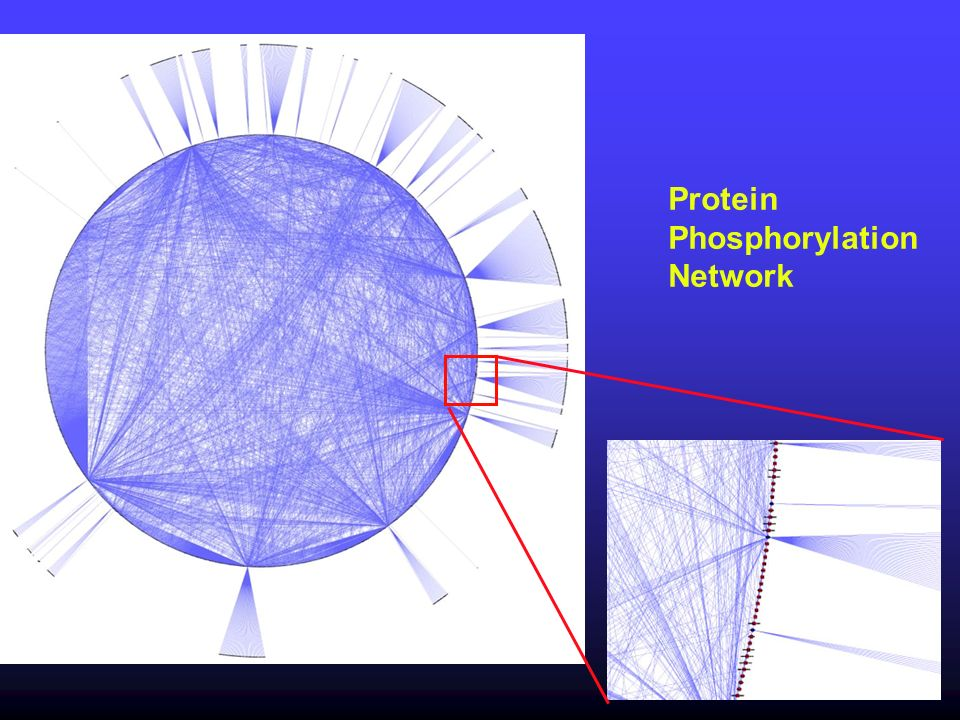 Protein Phosphorylation Network