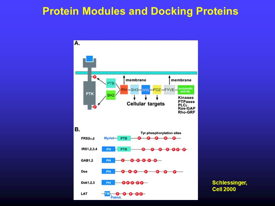 Protein Modules and Docking Proteins