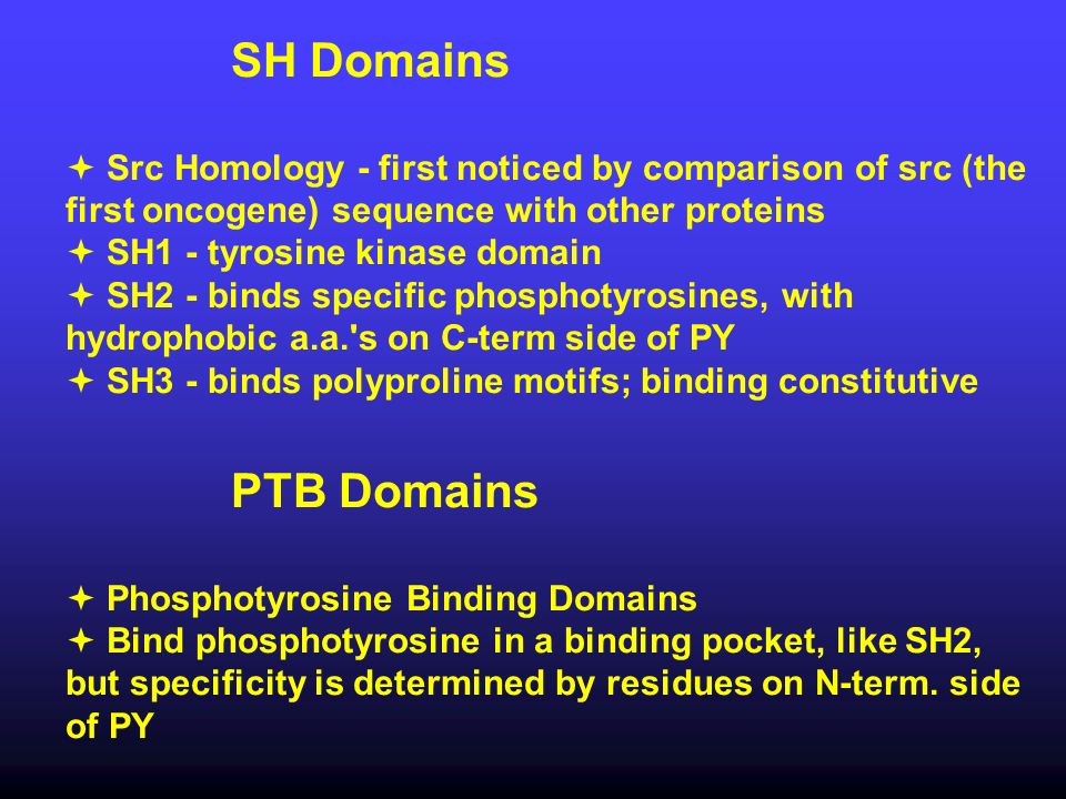 SH Domains  Src Homology - first noticed by comparison of src (the first oncogene) sequence with other proteins.