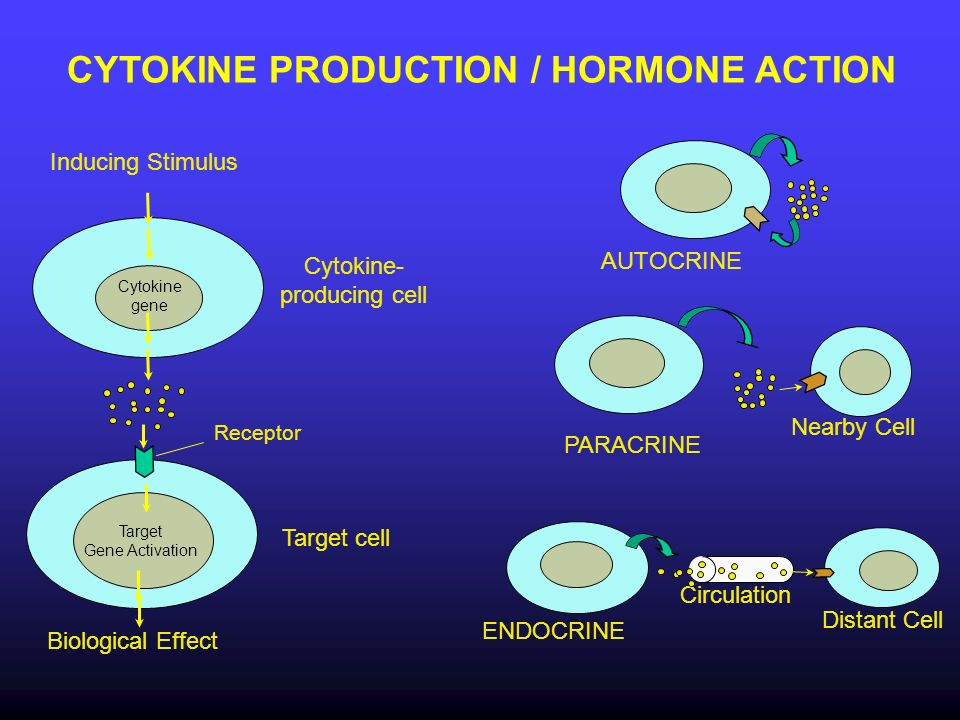 CYTOKINE PRODUCTION / HORMONE ACTION