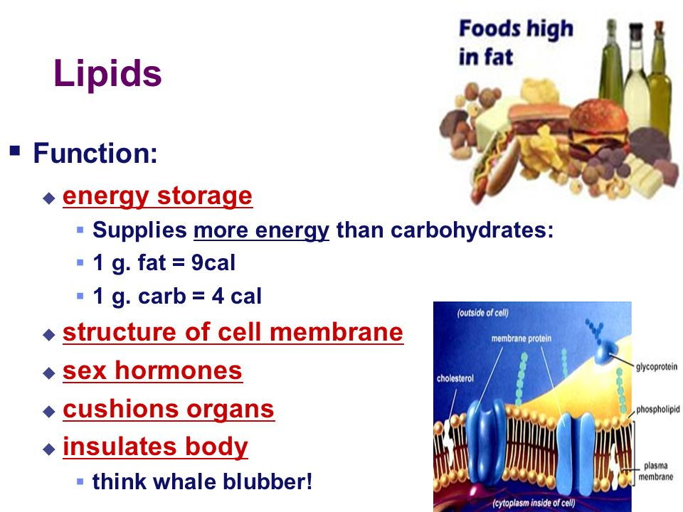 Lipids Function: energy storage structure of cell membrane