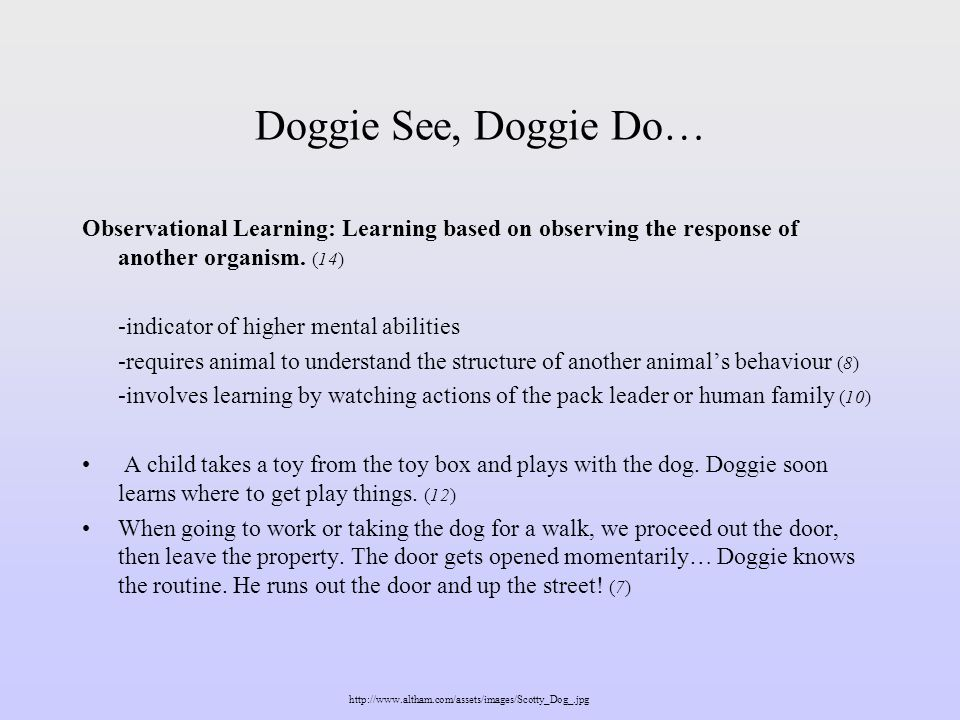 Doggie See, Doggie Do… Observational Learning: Learning based on observing the response of another organism. (14)