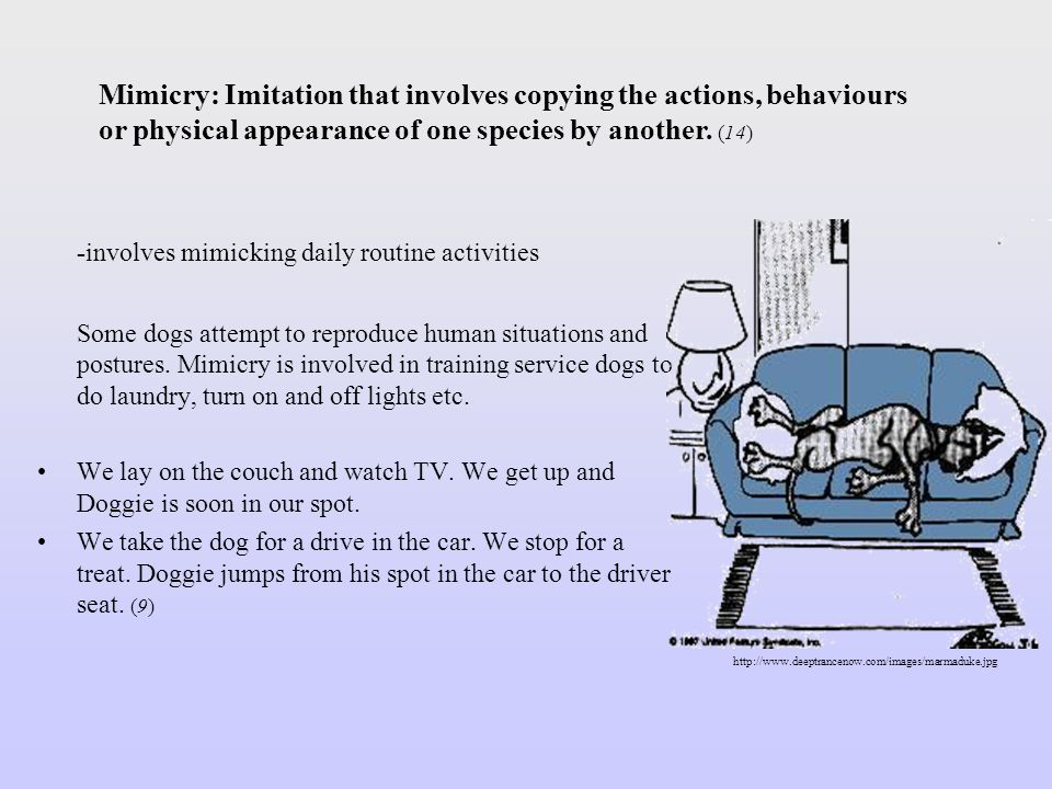 -involves mimicking daily routine activities