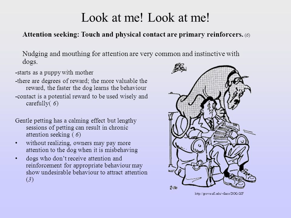 Look at me! Look at me! Attention seeking: Touch and physical contact are primary reinforcers. (6)