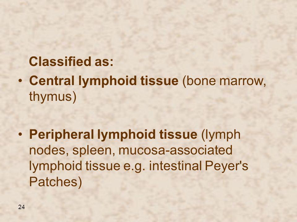 Classified as:Central lymphoid tissue (bone marrow, thymus)