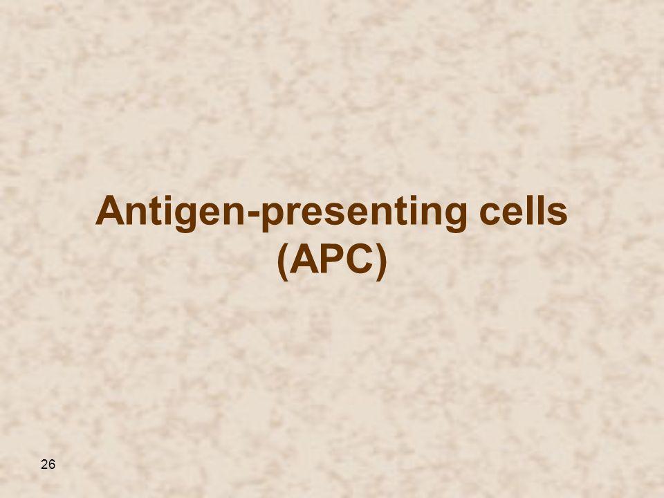Antigen-presenting cells (APC)