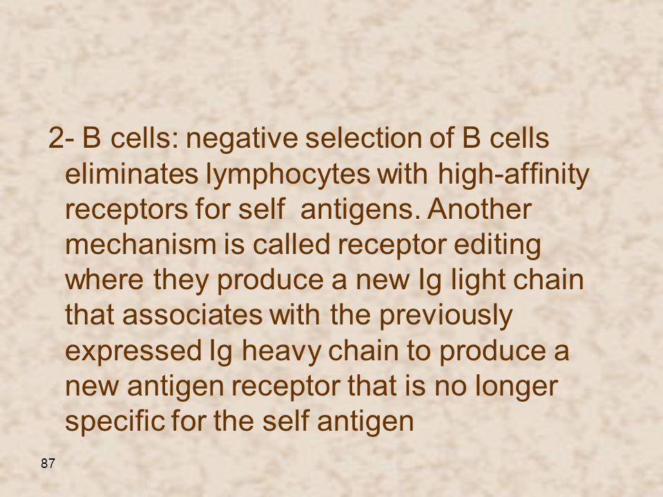 2- B cells: negative selection of В cells eliminates lymphocytes with high-affinity receptors for self antigens.