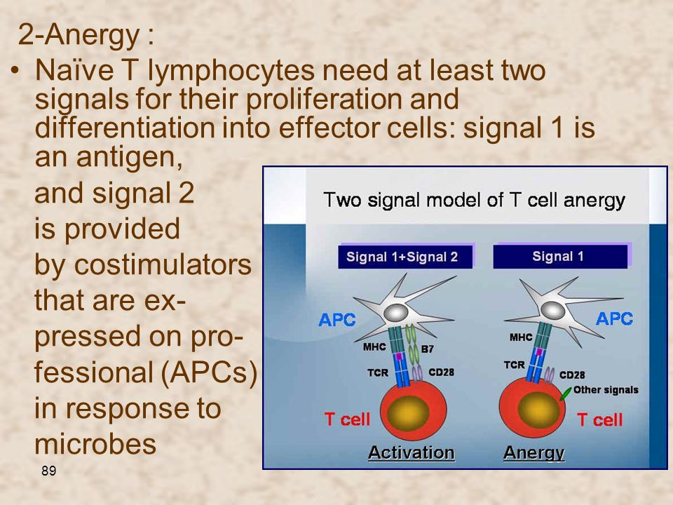 2-Anergy :• Naїve T lymphocytes need at least two signals for their proliferation and differentiation into effector cells: signal 1 is an antigen,