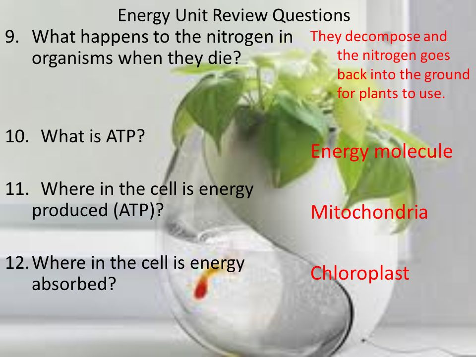 Energy Unit Review Questions