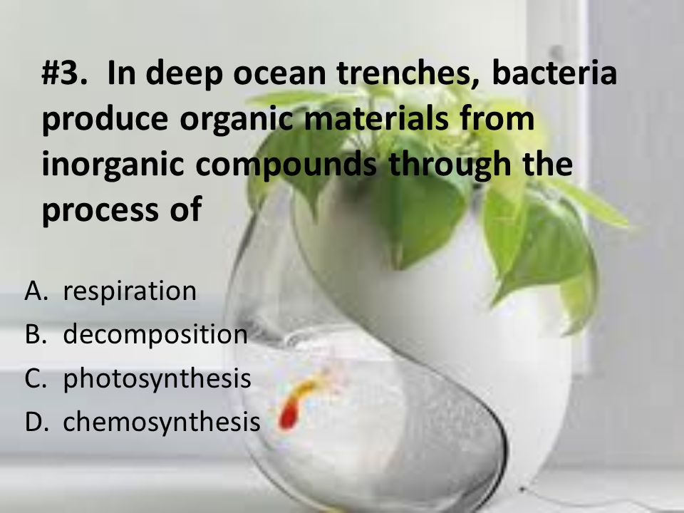 #3. In deep ocean trenches, bacteria produce organic materials from inorganic compounds through the process of