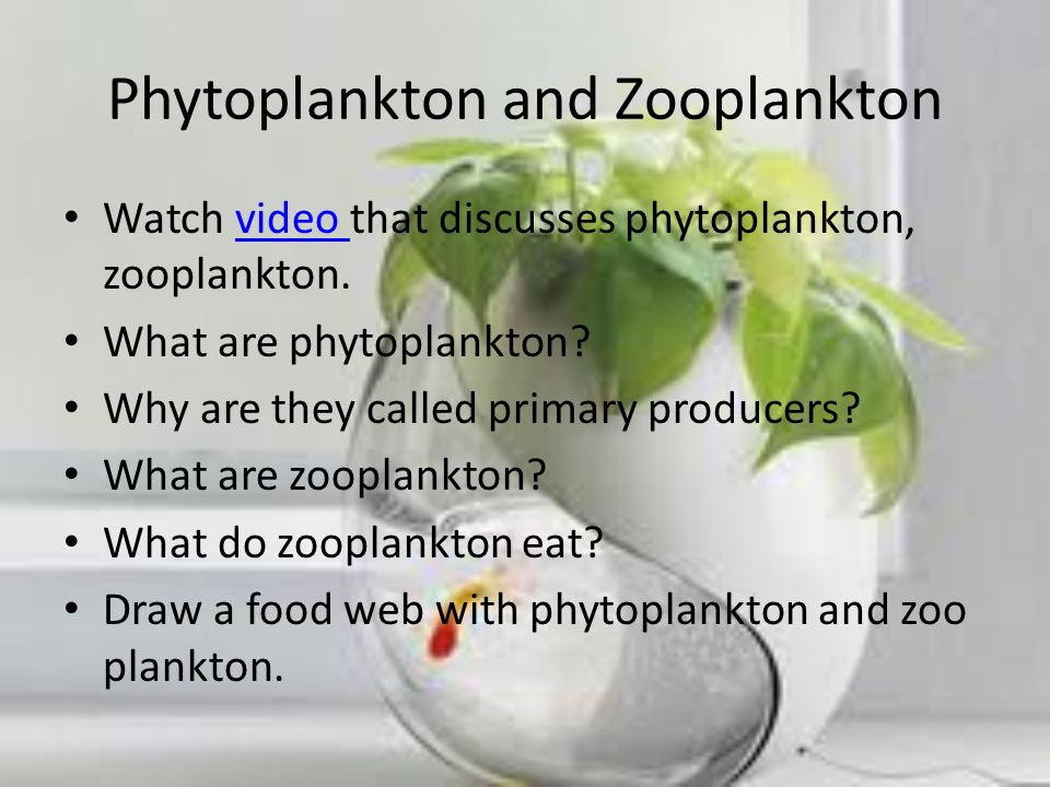 Phytoplankton and Zooplankton