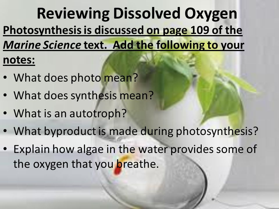 Reviewing Dissolved Oxygen