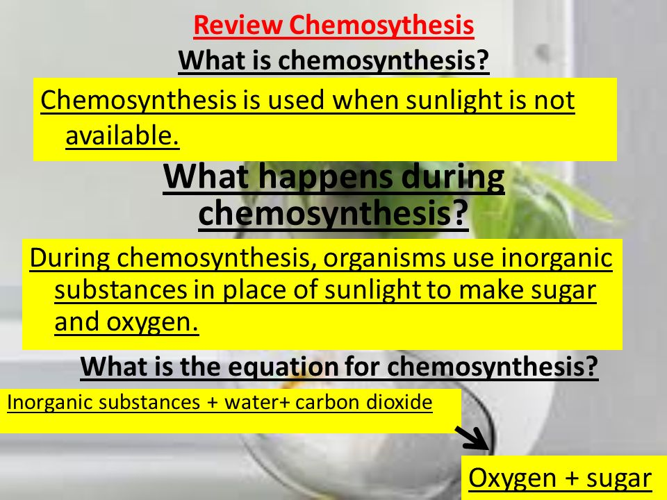 Review Chemosythesis What is chemosynthesis