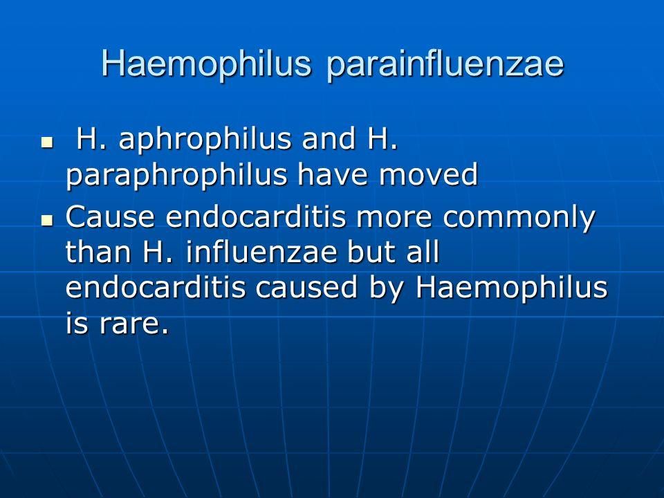 Haemophilus parainfluenzae