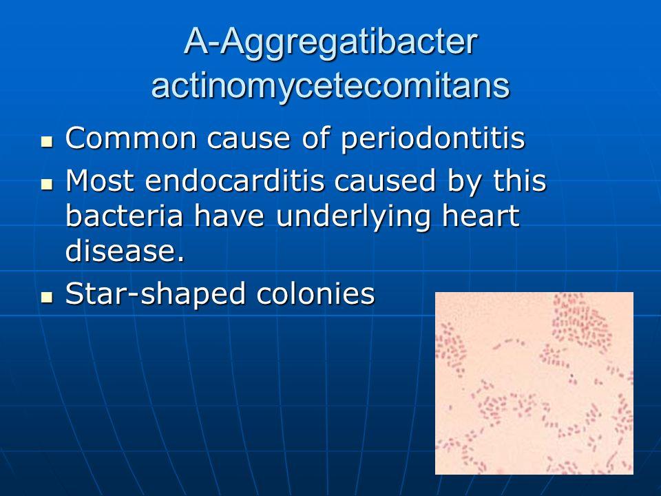 A-Aggregatibacter actinomycetecomitans