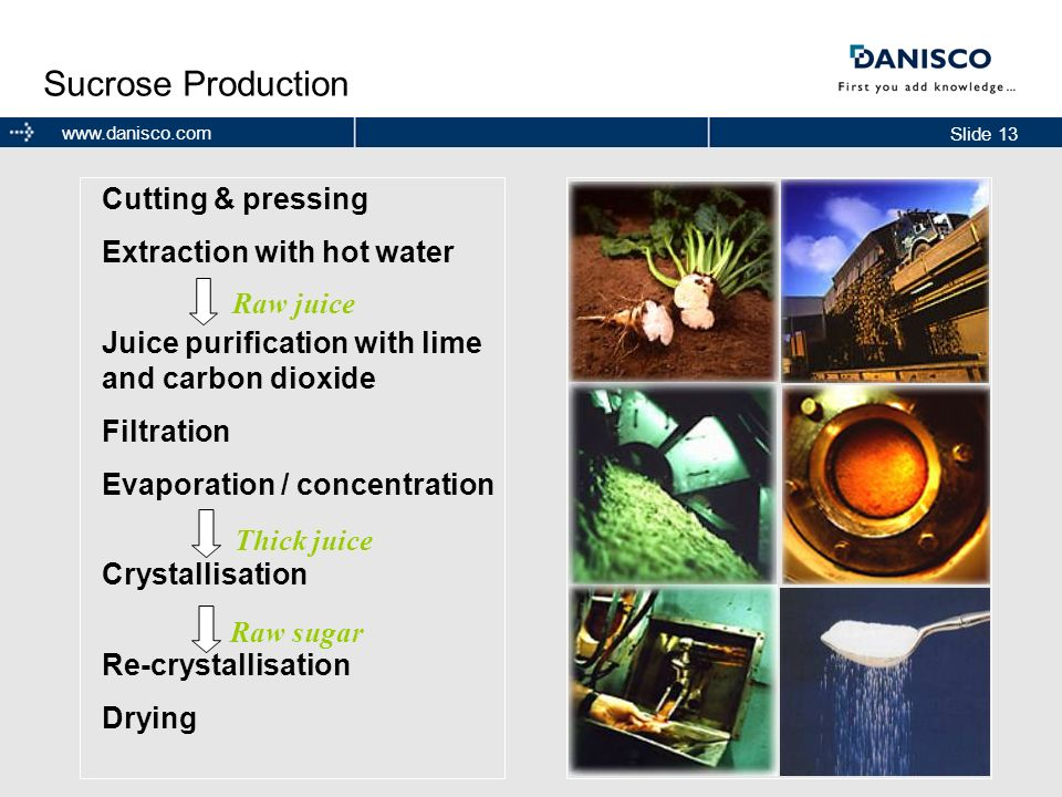 Sucrose Production Cutting & pressing Extraction with hot water