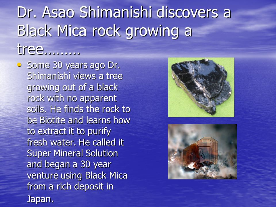 Dr. Asao Shimanishi discovers a Black Mica rock growing a tree………
