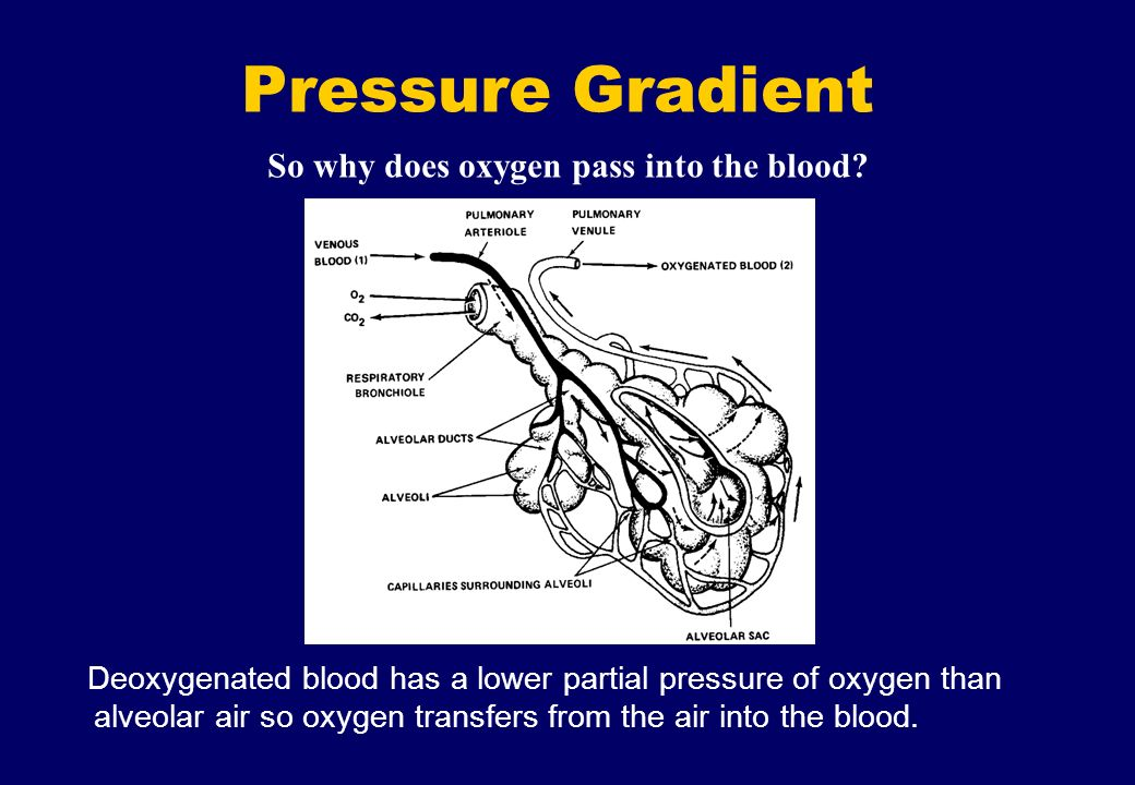 So why does oxygen pass into the blood