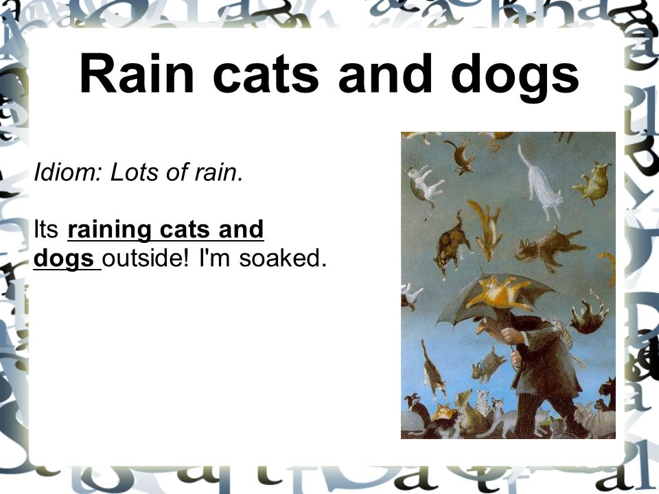 Rain cats and dogs Idiom: Lots of rain. Its raining cats and dogs outside! I m soaked