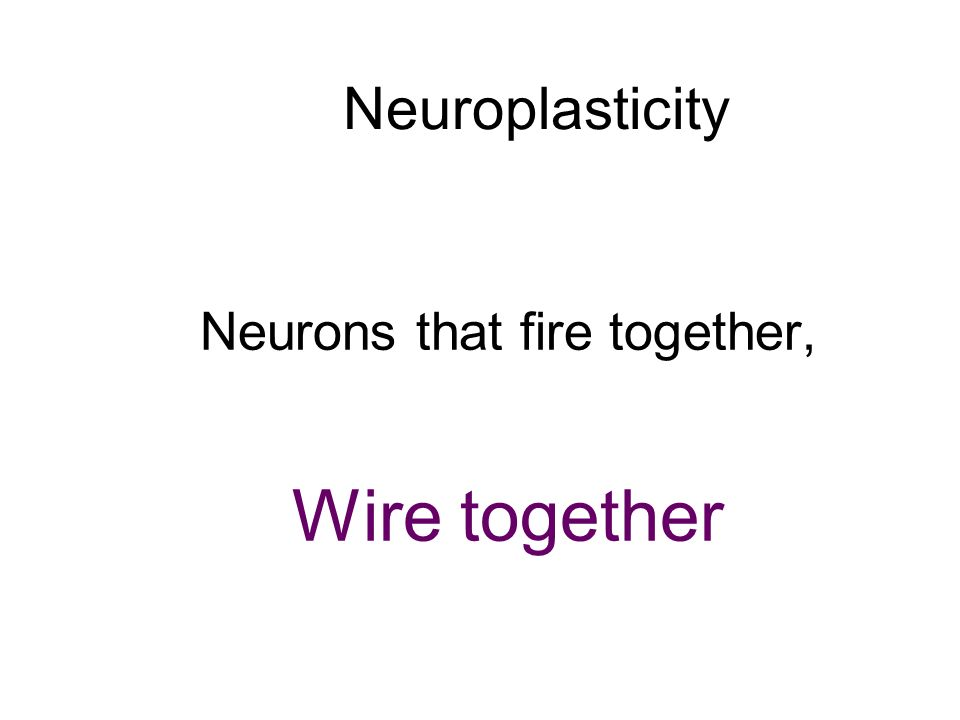 Neurons that fire together,