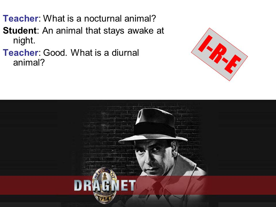 I-R-E Teacher: What is a nocturnal animal