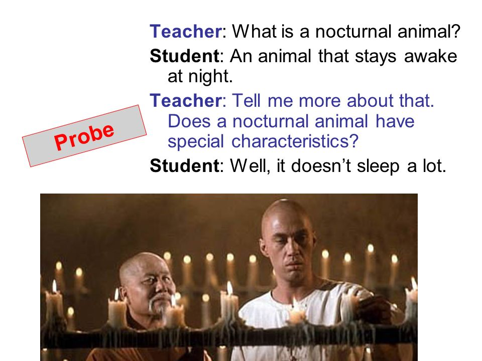 Probe Teacher: What is a nocturnal animal