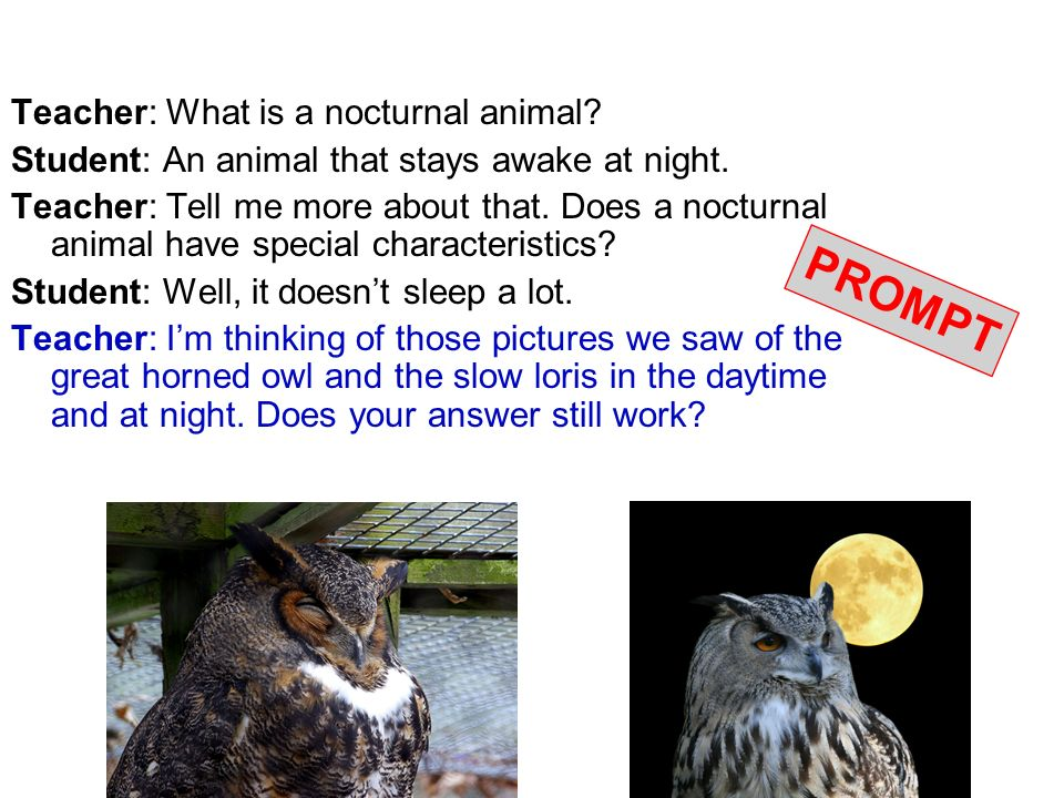 PROMPT Teacher: What is a nocturnal animal