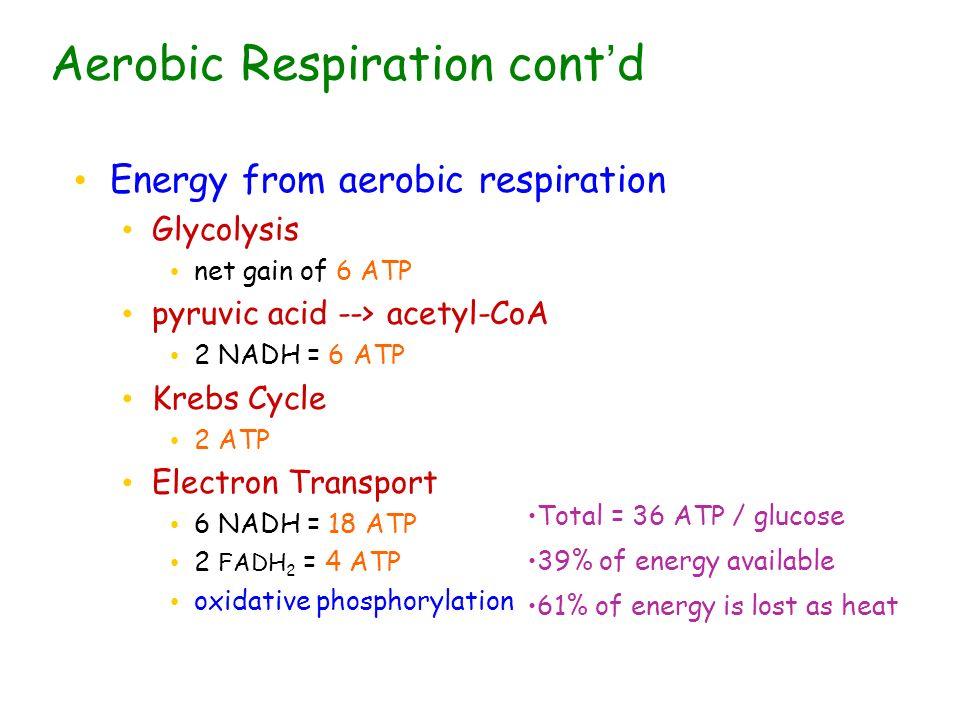 Aerobic Respiration cont'd