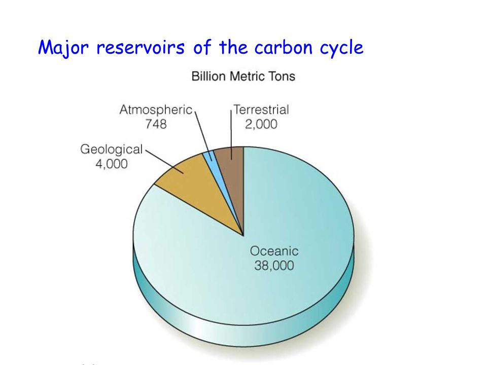 Major reservoirs of the carbon cycle
