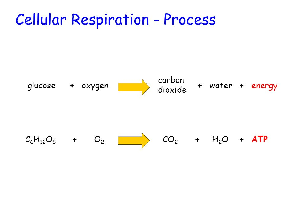 Cellular Respiration - Process