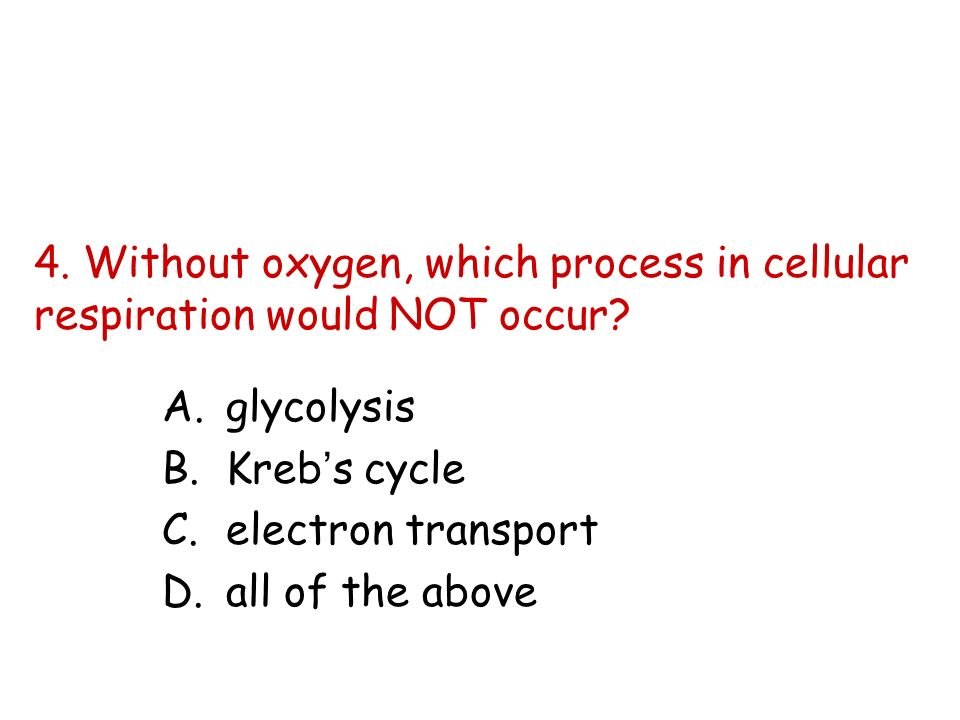 4. Without oxygen, which process in cellular respiration would NOT occur