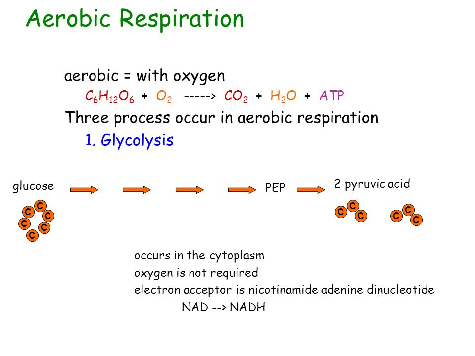 Aerobic Respiration aerobic = with oxygen