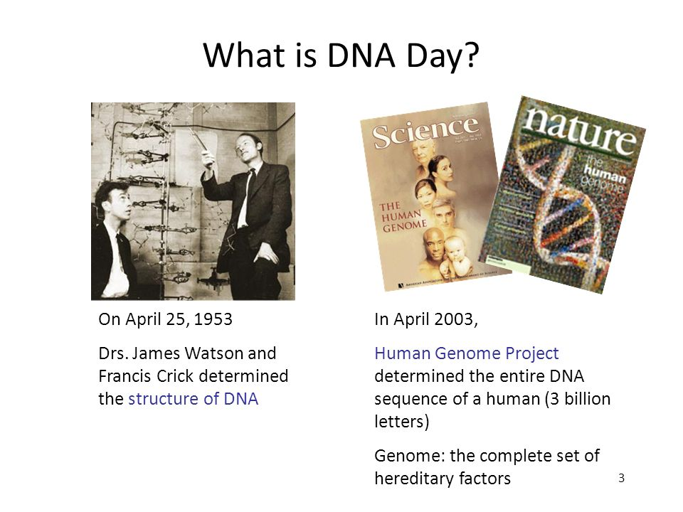 What is DNA Day On April 25, 1953. Drs. James Watson and Francis Crick determined the structure of DNA.