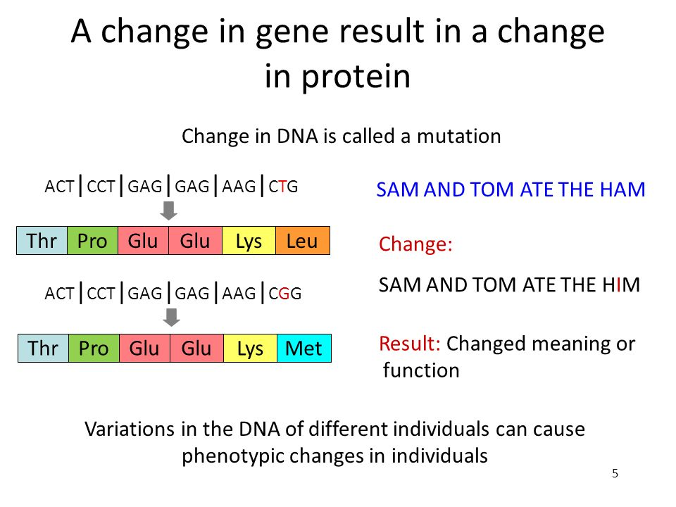 A change in gene result in a change in protein