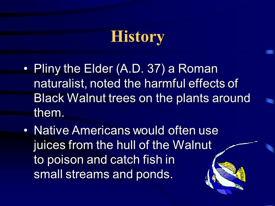 History Pliny the Elder (A.D. 37) a Roman naturalist, noted the harmful effects of Black Walnut trees on the plants around them.