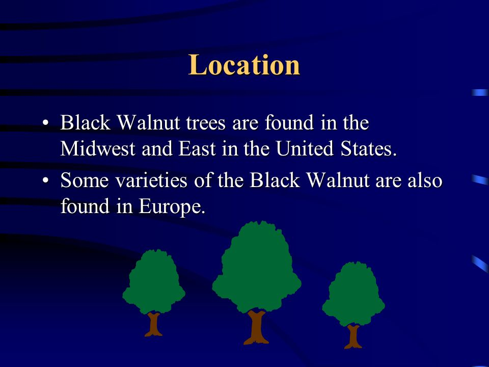 Location Black Walnut trees are found in the Midwest and East in the United States.