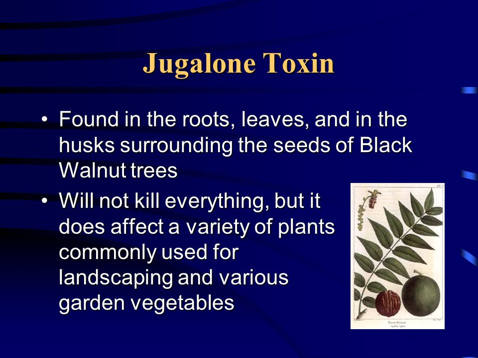 Jugalone Toxin Found in the roots, leaves, and in the husks surrounding the seeds of Black Walnut trees.