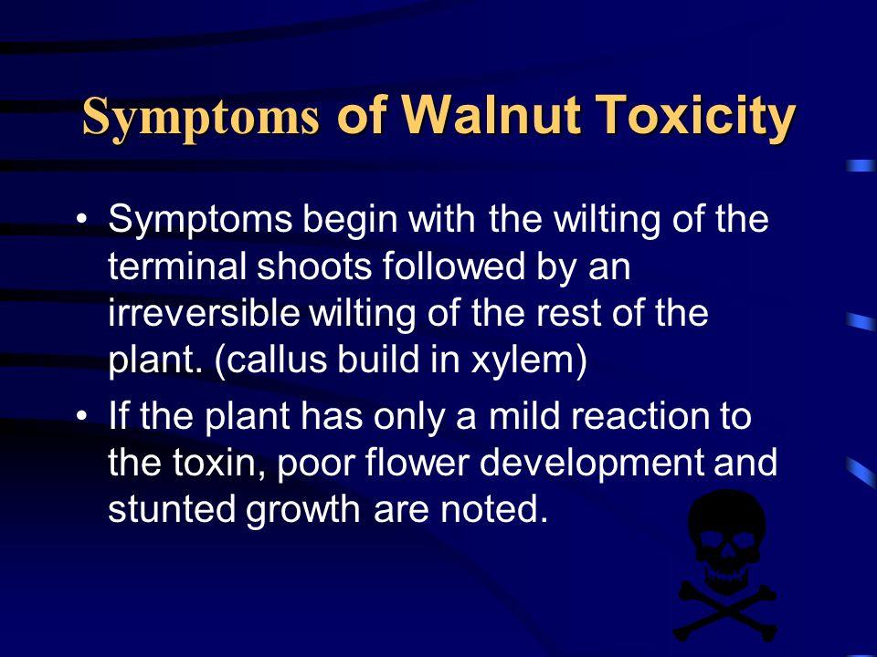 Symptoms of Walnut Toxicity