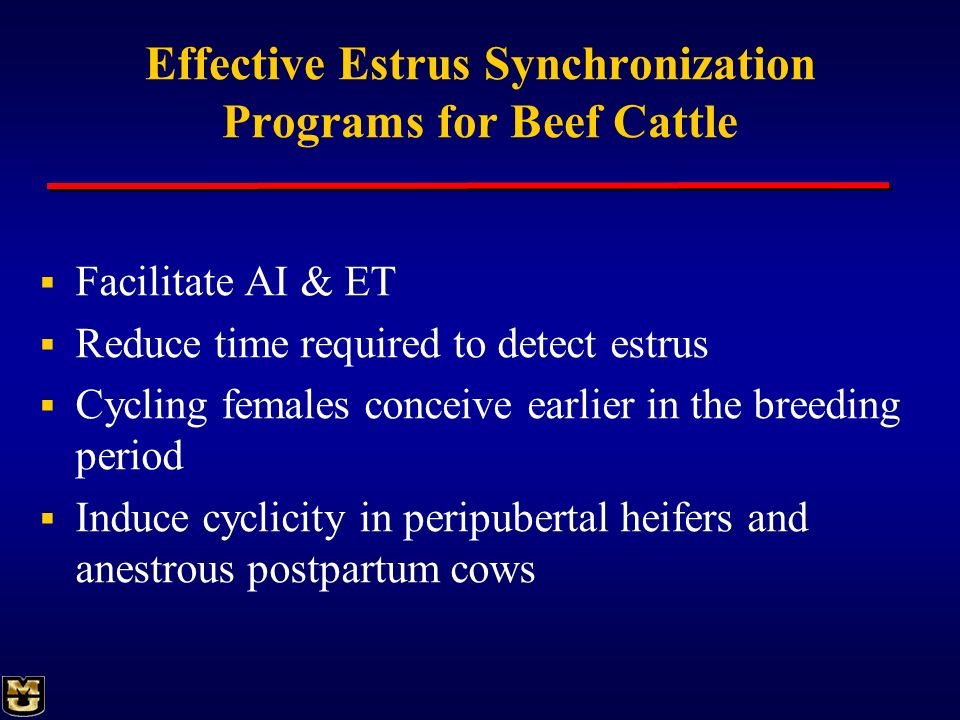 Effective Estrus Synchronization Programs for Beef Cattle