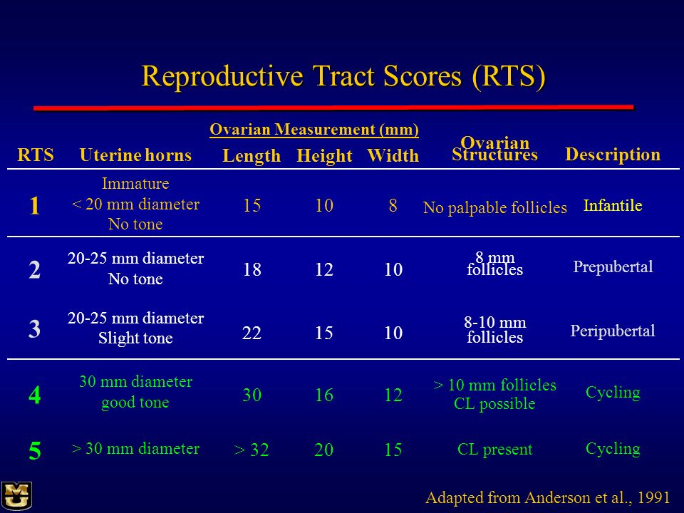 Reproductive Tract Scores (RTS)