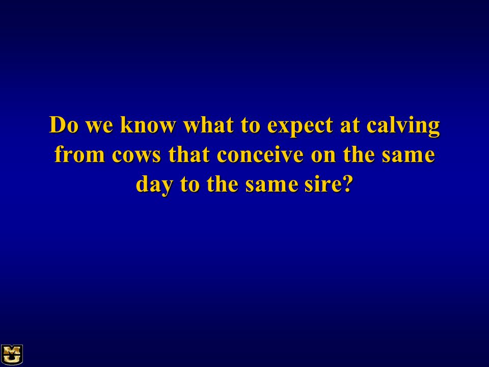 Do we know what to expect at calving from cows that conceive on the same day to the same sire