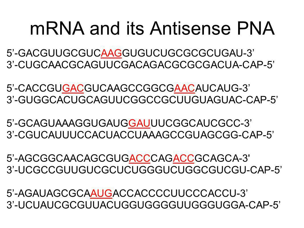 mRNA and its Antisense PNA