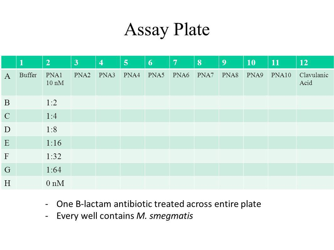 Assay Plate One B-lactam antibiotic treated across entire plate