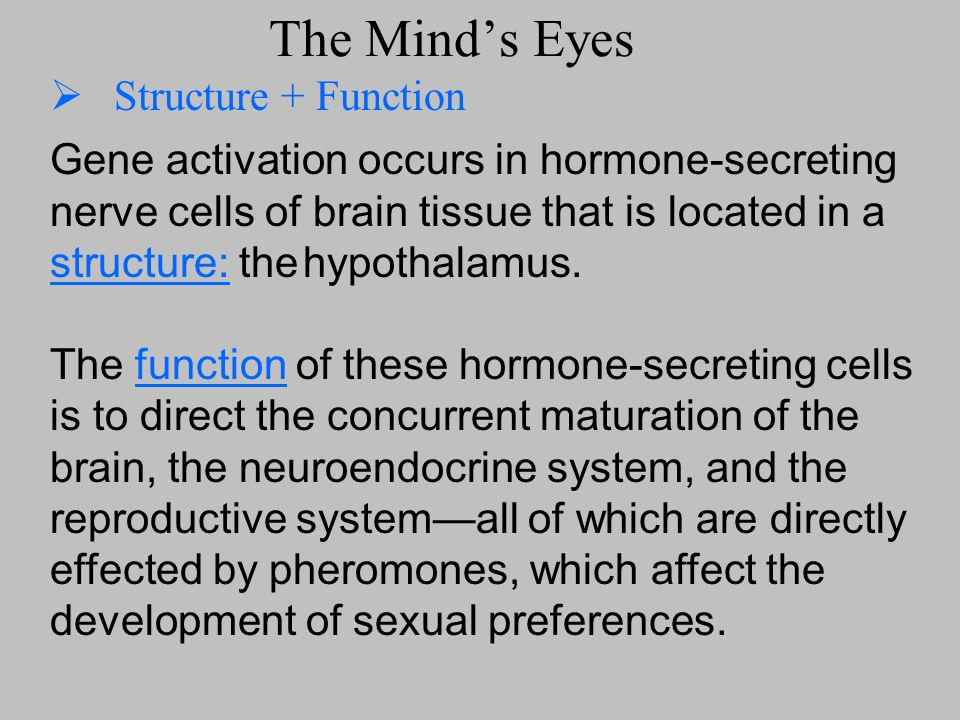 The Mind's Eyes Structure + Function