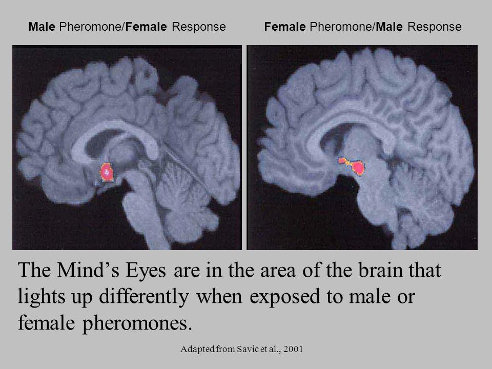 Male Pheromone/Female Response