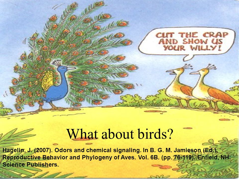 And now, I'll answer the first question, before it's asked: What about birds