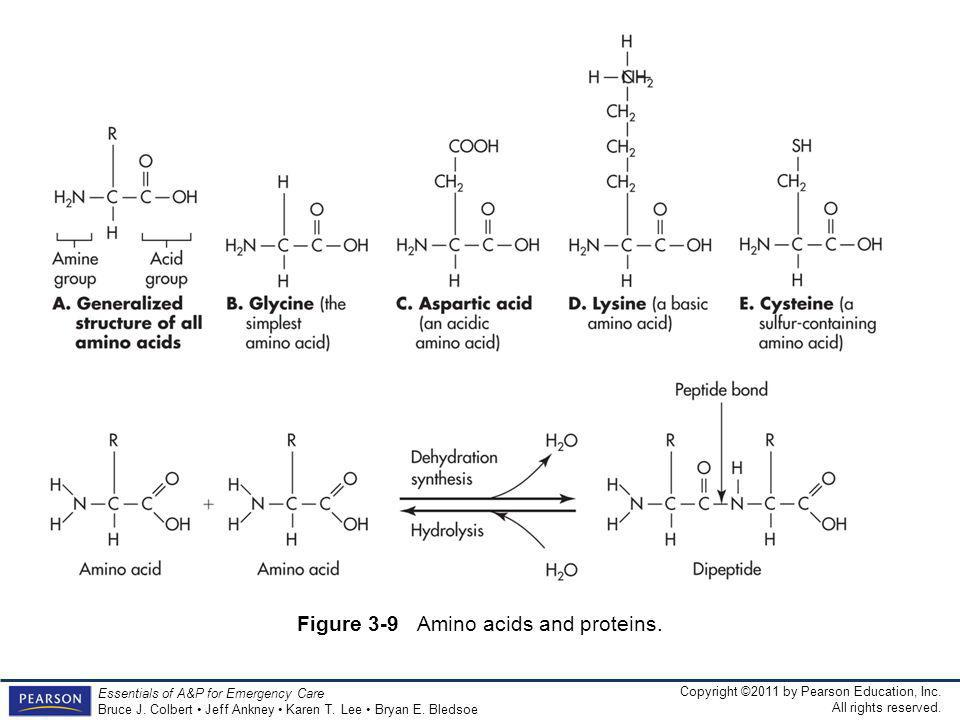 Figure 3-9 Amino acids and proteins.