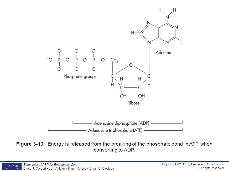 Figure 3-13 Energy is released from the breaking of the phosphate bond in ATP when converting to ADP.